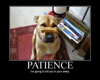 patience-dog-small.jpg